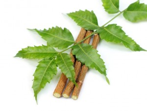 Uncover the Health Benefits of Neem,